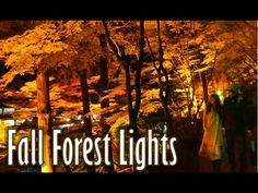 日本の秋 A Forest on Fire~Breathtaking Autumn Light Display 香嵐渓、絶景です。(紅葉・日本 Japan) - YouTube