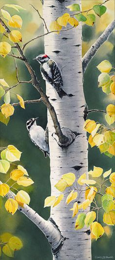 """Autumn Afternoon-Downy Woodpecker"" - by Susan Bourdet"