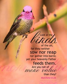 Look at the birds of the air, for they neither sow nor reap nor gather into barns; yet your heavenly Father feeds them. Are you not of more value than they? Mat 6:26 <3