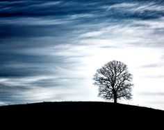 Moody blue tree silhouette fine art by SonningCreatives on Etsy