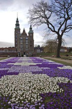 Denmark, Copenhagen - Crocus Bloom in front of Rosenberg Castle
