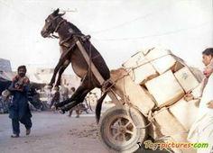 donkey hauling cargo