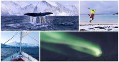 Olivers Walreise nach Nordnorwegen: Orcas voraus!