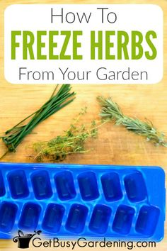 Freezing herbs is a great way to save your harvest all year long. Get step-by-step instructions for how to freeze fresh herbs, and tips for storing them. Freezing Cilantro, Freezing Fresh Herbs, Freeze Herbs, Fresh Chives, Fresh Basil, Fresh Mint, The Fresh, Fresco, Kitchens