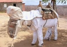 Meet Boneco, the world's first beekeeping donkey. He lives in Brazil and helps his owner, Manuel Juraci, make honey. Boneco also does not appear to like his beekeeping suit. But boy does he look adorable while wearing it. Animals And Pets, Funny Animals, Cute Animals, Bee Suit, The Donkey, Bees Knees, Bee Keeping, First World, Kittens