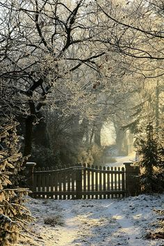 ❄️ Open the gate and let me walk through the silence of winter wonderland.where the reflective snow drops shimmers and glistens into tiny sparkles of diamonds. Winter Szenen, Winter Magic, Winter Time, Winter Christmas, Winter Light, Merry Christmas, Hello Winter, Winter Walk, Beautiful World