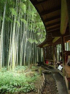 bambus garten im hause wachsen bambus wald