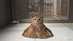 じっ…… Cute Funny Animals, Cute Baby Animals, Animals And Pets, Cute Cats, Beautiful Owl, Animals Beautiful, Photo Animaliere, Owl Pictures, Baby Owls