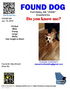 Found Dog - Pit Bull - Fort Valley, GA, United States