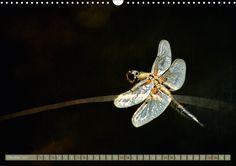 Die fabelhafte Welt der Libellen - CALVENDO