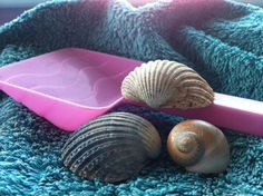 That big shell looks like it's made out of fabric. Stitched by the sea.