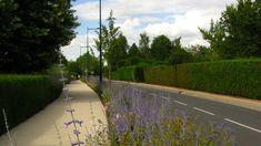 Séquence des jardins - L'entrée de Bourg - Paucourt - Format Paysage
