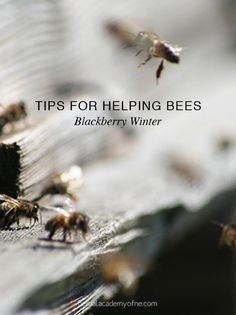 Tips for helping bees - blackberry winter