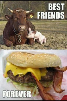 Life cycle of cows and pigs - Burgers with bacon... More Funny Pictures at: http://MoronsAreEverywhere.Com