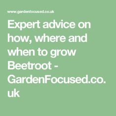 Expert advice on how, where and when to grow Beetroot - GardenFocused.co.uk