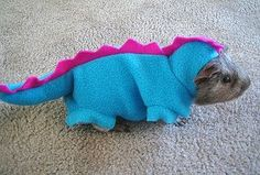 If I ever have a guinea pig... this is its halloween costume... :)