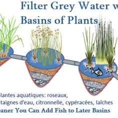 Filter Grey Water with Basins of Plants
