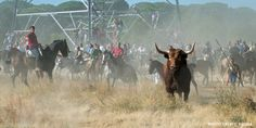 In just a few weeks, a bull will be chased out of the town of Tordesillas by groups of men on foot and... (4696 signatures on petition) 15th september.