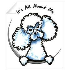 basketball poodle - Google Search