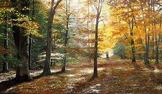 Herbstwald von Gerd Pflumm