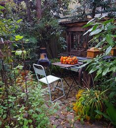 実は庭には柿・スモモ・栗・レモン・八朔・ブルーベリーなどを植えています。その中で、#柿 が今年は山盛り採れていますねん♪でも摘果をしないので←損をした気分になる←貧乏性♪(笑)、・・・実はちょっと小ぶりですが♪みなさんも庭に実のなる木を植えてみませんか? #チムニー #サビサビ #果物のある暮らし #ガーデン #雑木 #雑木の庭 #ガーデニング #ナチュラルガーデン #ナチュラルガーデニング #緑のある暮らし #グリーンのある暮らし #garden #gardening #gardenlove #instagarden #instagardenlovers #instagardening #instagardeners #201711