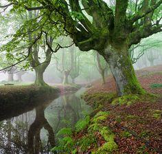 Otzarreta Forrest, Spain    The FOREST MARAVILLADOR by Juan PIXELECTA