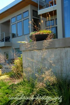 Prairie dropseed plumes and a modern cast stone container.