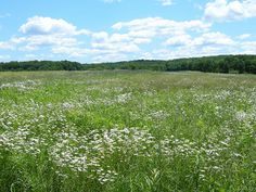 Griggstown Native Grassland Preserve, Somerset Co, NJ | Flickr ...