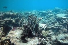 Are We Witnessing The End Of Coral?