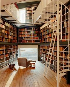 A book hoarders heaven!  All great home office libraries have a place for the dog!
