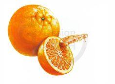 #오렌지 #한라봉