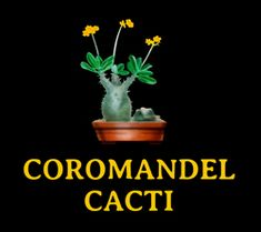 Cacti and Succulents Data Library with Photos by Coromandel Cacti
