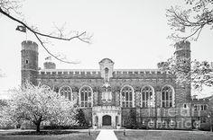 Bryn Mawr College. T