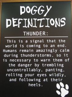 Yep.  This is EXACTLY what I think my dogs are thinking during thunder storms.