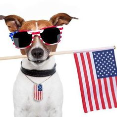 SPECIAL PROMO! Use code 4THOFJULY and save 15% and get an extra FREE toy and treat! #subscribe #subscriptionbox #subscription #pet #pets #petstagram #petsofinstagram #love #puppy #bark #woof #yes #fun #party #4thofjuly #summer #animal #dog #dogs #dogsofinstagram #dogstagram #cat #cats #catsofinstagram #like #like4like #follow4follow