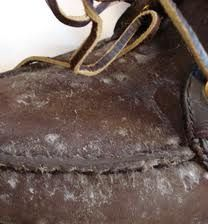 Mold on Shoe Leather .... Remove mold on leather, Mold and mildew removal
