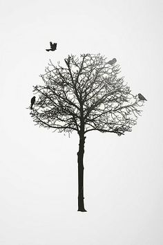 In remembrance of Sir Isaac Newston and those who fancy reading under a tree. Mind your head for both bird poop and falling apples!    Silhouette Tree Wall Decal by Urban Outfitters