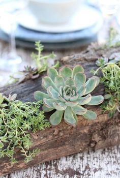 Add rustic charm to your outdoor table with this succulent DIY centerpiece.Here's an original idea to decorate your outdoor space! We already know that you probably don't think about preparing your garden now but as you can see in the photos this decorative element is suitable for interiors as well.We're going to share a centerpiece you can do to decorate your outdoor table.   As you can see the combination of worn wood along with several plants in shades of blue and green, as well as… Succulent Planter Diy, Succulent Centerpieces, Succulents Diy, Planting Succulents, Outdoor Table Decor, Outdoor Tables, Shade Plants, Fall Diy, Rustic Charm