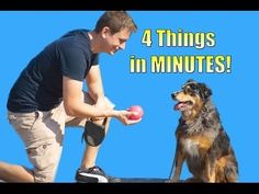 ▶ How to Teach your Dog to do 4 things in Minutes (Roll over, Play dead, Sit, Lie down) - YouTube