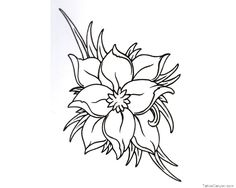 Lily flower coloring pages lily flower outline coloring pages colour lily flower . Flower Outline Tattoo, Flower Tattoo On Side, Flower Tattoo Drawings, Flower Tattoo Shoulder, Outline Drawings, Flower Tattoo Designs, Girl Drawings, Tattoo Flowers, Black And White Flower Tattoo
