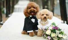 #alwaysandforeverfloridaweddings #petreverendarleneponack #petreverend #dogweddings #petweddings #doggieidos #bowvowwows