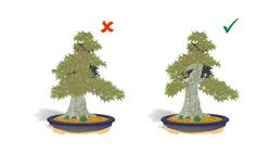 In bonsai the rule of thirds state's that the first (lowest and biggest) branch should be at about one third of the total height of the tree.It is the trunk that gives the tree its visual strength, and every effort should be made to have at least the bottom two thirds of the height, clear of branches at the front of the tree.