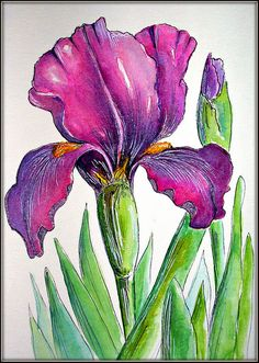 IRIS LOVE This is a Watercolor & Ink Painting from a photo of one of my Iris in my garden. It has been awhile since I painted one...and I thought now was the time...:)