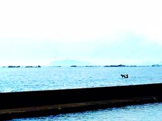 hayama sea dog mother