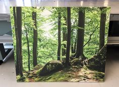 Acoustics panel with UV print. Great motiv from the Norwegian nature. Acoustic Panels, Nature, Plants, Naturaleza, Nature Illustration, Natural, Plant, Planting, Scenery
