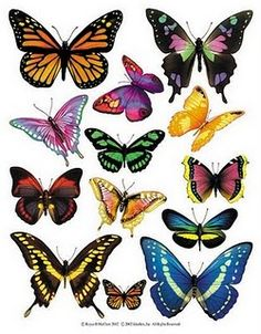 Enlarged view of a sheet of butterfly accent stickers from IdeaStix. Great selection, and I can imagine some fun uses for this. Butterfly Drawing, Butterfly Painting, Butterfly Wallpaper, Butterfly Wings, Butterfly Images, Butterfly Pictures To Color, Butterfly Artwork, Butterfly Decorations, Vintage Butterfly