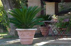 vasi terracotta - Cerca con Google