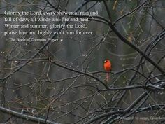 Glorify the Lord, every shower of rain and fall of dew, all winds and fire and heat. Winter and summer, glorify the Lord, praise him and highly exalt him for ever. ~ The Book of Common Prayer End Of Winter, Winter Rain, Book Of Common Prayer, Rain Photo, Evening Prayer, Spiritual Thoughts, Episcopal Church, The Power Of Love, Snow And Ice
