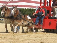 The Michigan Dynamometer Association presented a Draft Horse Pulling competition at the Chelsea Community Fair.
