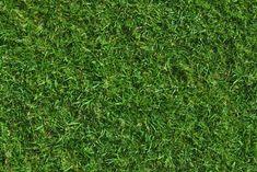 grass texture - Google 검색